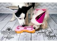 Dog Birthday Photoshoot-Dog Photography