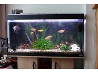 fish tank 180 litres with stand and external filter