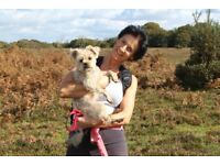 Professional. reliable & caring dog walking & daycare service in Welwyn and surrounding areas.