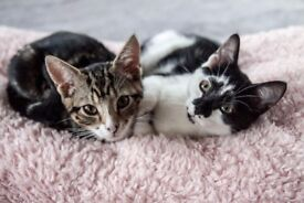 Three healthy, vaccinated and absolutely charming kittens are looking for loving and caring homes