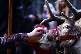 What could be more magical at Christmas than working at the Lodge where Santa keeps his reindeer?