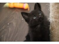 Furry kittens for new homes now