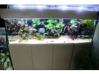 TROPICAL OR MARINE AQUARIUM 6X2X2 WITH ALL EQUIPMENT AND FISH