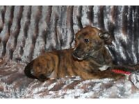 **last female available**