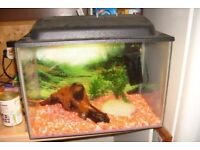 Fishtank (with gravel pump, and bogwood.