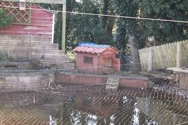 DUCK HOUSE for Sale