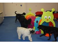 Diamond Dogs Canine Creche Ltd, offering supervised, unkennelled day care for your furry friend