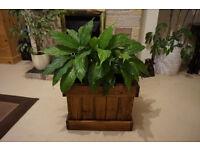 Wooden flower / christmas tree box, pot.
