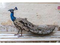 Unique Metal Peacock