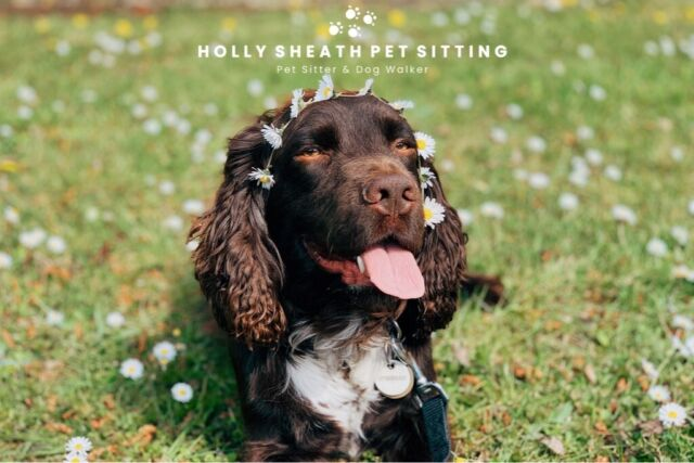 Pet Sitter & Dog Walker | Holly Sheath Pet Sitting | in Winchester,  Hampshire | Gumtree