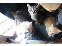 gorgeous kittens looking for forever homes (grey tabby now sold )