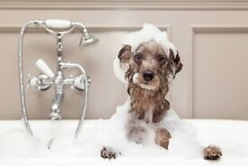 Established Dog Grooming Business for sale - Fully Equipped