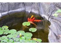 Pond fish and plants
