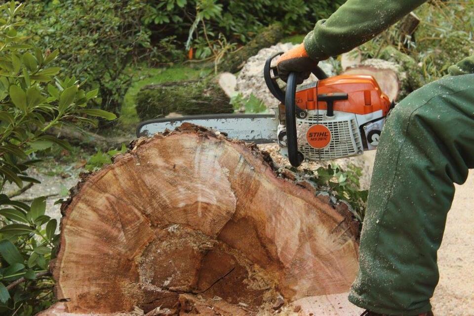 Baumfällung | Baumfällarbeiten | Baumpflege | Baumkletterer in Rotenburg (Wümme)