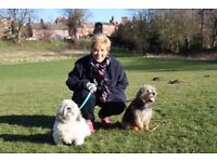 My Dog Walker -Woodbridge, Melton, Martlesham and surrounding areas. Insured, dog first aider,
