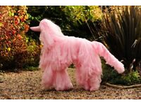 Pink Afghan Dog Mannequin (NOT A TOY)