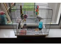2 young birds budgies pet with free cage and accessories - toys, some food - Handsworth/Lozells