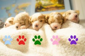 5 Beautiful Puppies for Sale