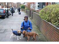 Highbury / Islington dog walkers