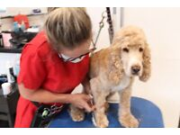 FREE DOG GROOMING IN NORTH LONDON