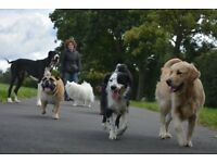 Dog walking & dog day care in Queen's Park, Willesden, Kilburn, Hampstead Heath, West Hampstead