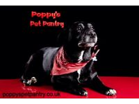 Dog walking, Pet sitting, Mirochipping & Online pet store
