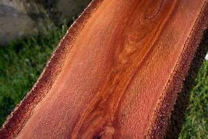Holly banksia timber slab, 250cm x 18-28cm x 35mm. Ref #3 Mount Lawley Stirling Area Preview