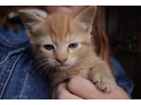 Very Tame Farm Kittens