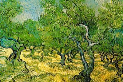 Vincent van Gogh Olive Orchard Mural - Poster 36x54 - Orchard Mural