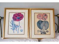2 Gold Framed Floral Pictures