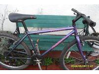 specialised rock hopper mountain bike