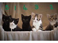 Beautiful friendly and playful kittens