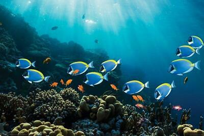 Tropical Fish Coral Reef Scenery Surgeon Fish Goldies Underwater Poster 36x24