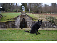 Dalmore Dog Services - dog walker - let outs - cat visits