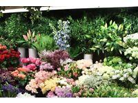 Night Shift Florists & Flower Conditioners - Immediate start