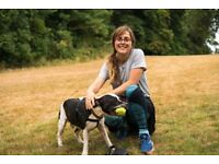 Professional Dog Walker, Brislington/Knowle Area, Fully Insured