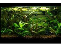Nano aquarium full setup 40l inc. shrimps and fish