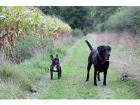 New Forest Doggy Day Care - Dog walking - Bransgore, Christchurch
