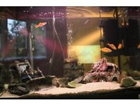 Selling my fish tank with fishes and fully accesories
