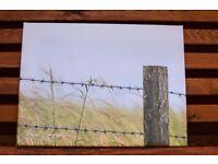 Holding back nature photo canvas picture 30cm x 40cm