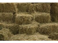 Small bale hay 2016 horse rabbits sheep goats