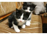 Five little kittens ready to become your family member just for : (each £110)