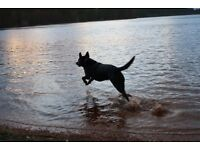 Reliable and Experienced Dog Walker - Bearsted/Maidstone