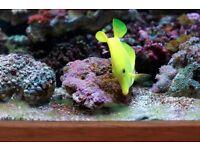 Marine fish tank salt water red sea coral pro sea water