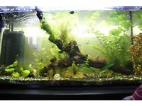 120L tropical fish tank. Complete with external filter, heater, upgraded lights, fish and plants!