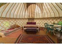 Stunning 5m 'Avalon Yurts' white canvas yurt, with wood door, insulated floor, and woodturning stove