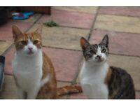 Two Beautiful Cats