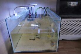 4 ft fish tank (8mm glass ) 60x120x50 , approx 300 liters