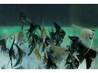 Tropical fish bundle for sale