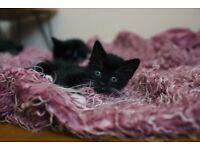 4 kittens to loving home